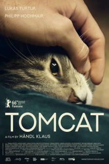 Tomcat - ทอมแคท