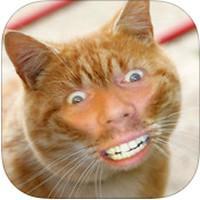 Cat Me (App ทำหน้าแมว พร้อม สติ๊กเกอร์แมว น่ารัก)