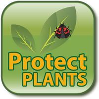 ProtectPlants (App ข้อมูลพืช โรคพืช เพื่อเกษตรกร ทุกคน ฟรี)